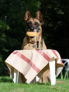 Gehoorzame hond